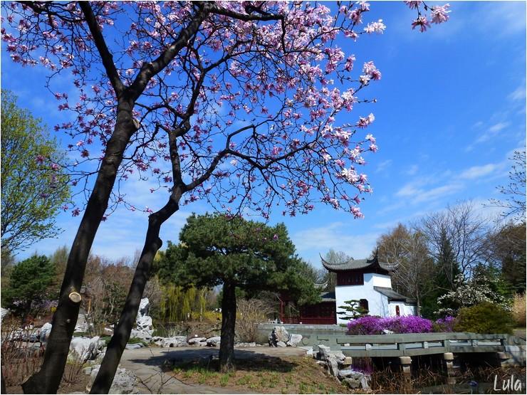 Floraison printanière au Jardin Botanique de Montréal
