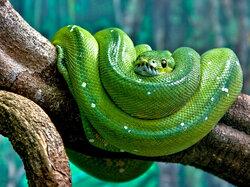 Vert vous avez dit vert ?