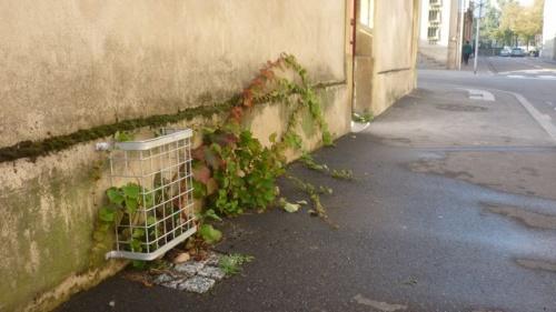 Beau travail des jardiniers (29 septembre 2011)