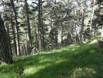 La montée dans la forêt