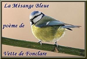 Mesange-bleue.jpg