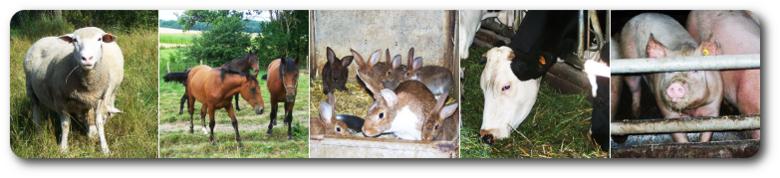 Les animaux de la ferme des Terres Froides