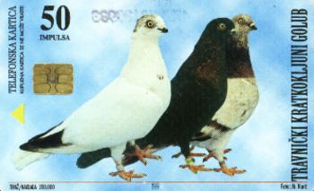 bosnia & hercegovina C