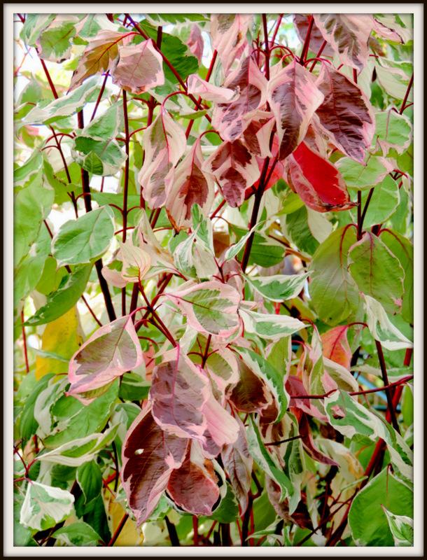 Aux nuances de l'automne...