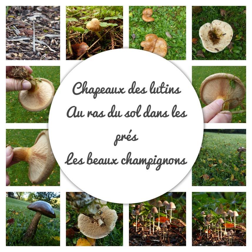 Montages d'automne