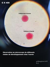 Chapitre 4: les mécanismes de la reproduction sexuée