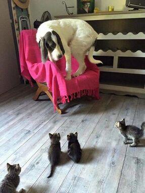 """Résultat de recherche d'images pour """"chat qui a peur"""""""