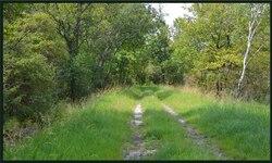 St médard bois de Bedon 2 Juin