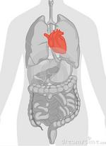Etude du corps humain