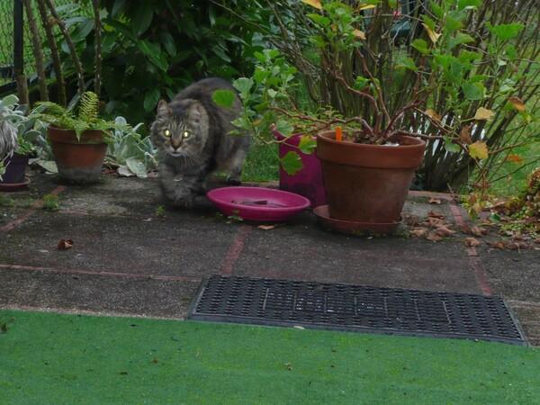 BARF, insuffisance rénale du chat et questions