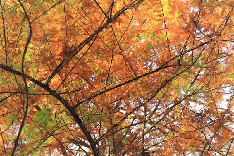 mes visions d'automne