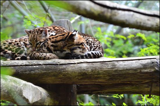 La Flèche Zoo
