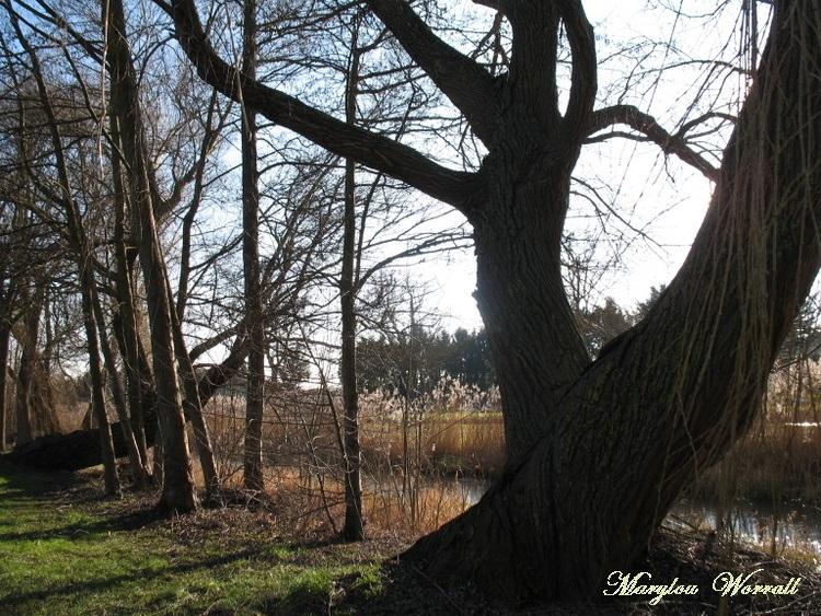 Biesheim (68) : Au bord de la rivière 2/3