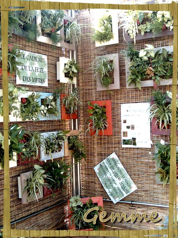Plantes murales, Nature en Fête, Ste-Foy