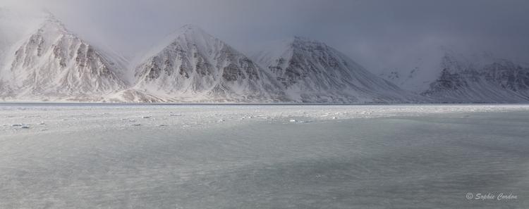 Une pause dans les morses... la fin de Wijdefjorden
