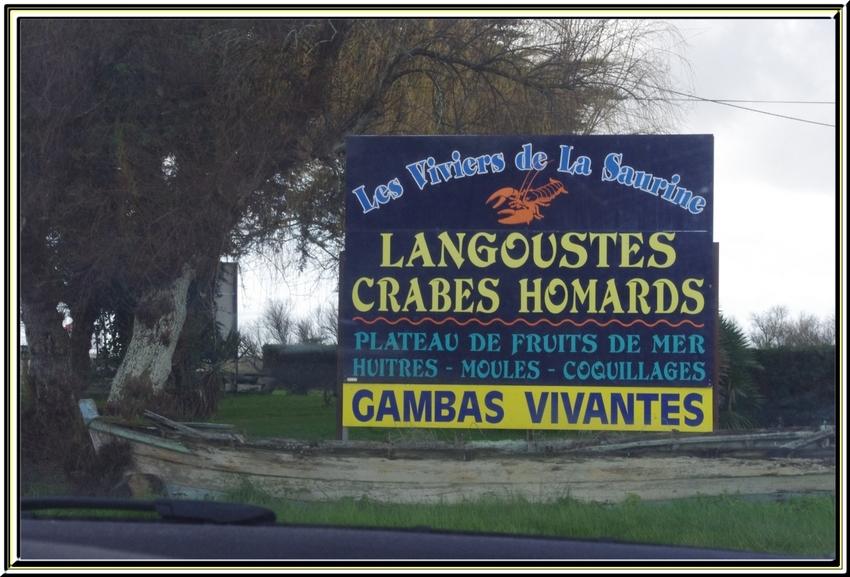 La route des huîtres entre Le Château d'Oléron et Boyardville