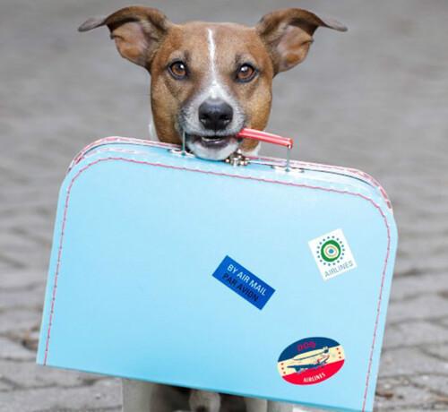 Comment voyager à l'étranger avec votre animal de compagnie?