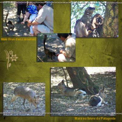 Blog de chipiron :Un chipiron dans les Landes, Parc animalier de Labenne Océan