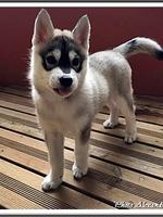 Nala (2 mois)