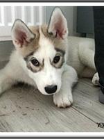 Luna (3,5 mois)