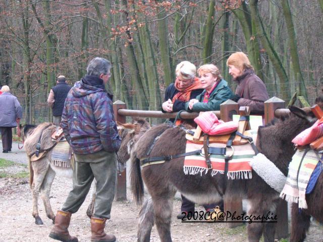 Balade en Forêt de Roumare
