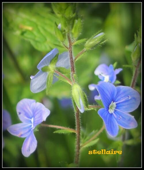 Les fleurs sauvages du printemps