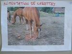 """Huitième exposé """"Les chevaux"""""""