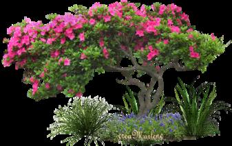 ♥ L'arbre en fleur ♥