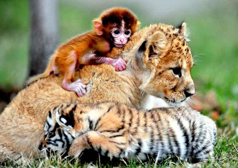 Histoires insolites et incroyables d'animaux (DIVERS)