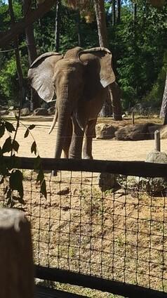 Zoo de la Flèche (1)
