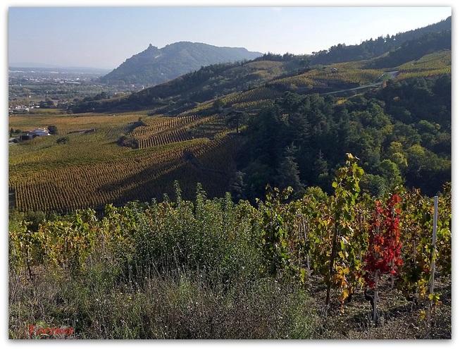 La colline de Crussol depuis le vignoble de Cornas
