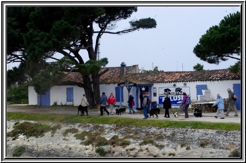 Dimanche dernier une belle balade sur l'île d'Oléron