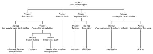 SC22- la classification et le tri des animaux