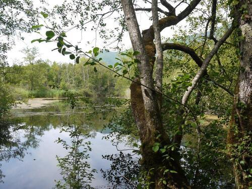 L'étang du Tendret