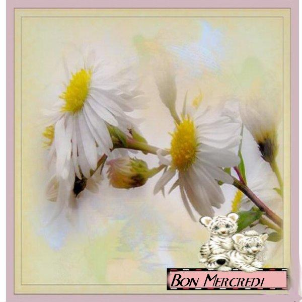 Blog de lisezmoi : Hello! Bienvenue sur mon blog!, Bon Mercredi, les ami(e)s