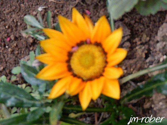 Quelques fleurs juste pour le plaisir …....