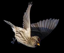 Repas pour les oiseaux !