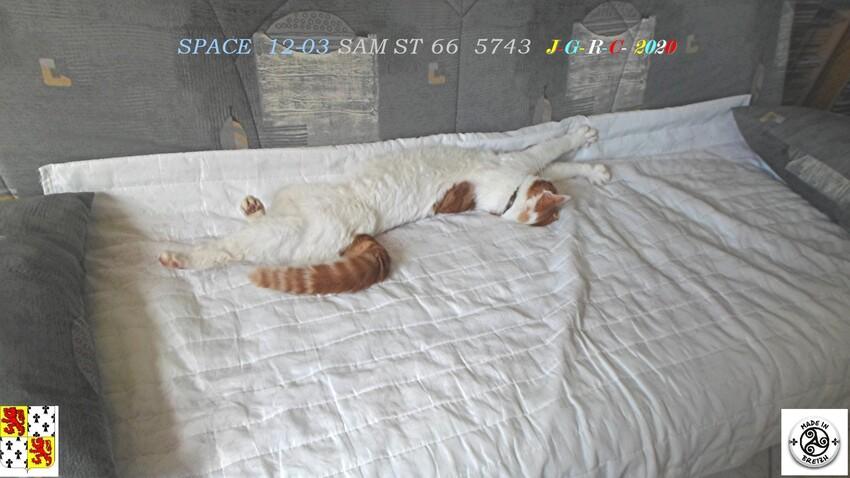 NOS AMIS LES BÊTES:  SPACE   D   21/04/2020
