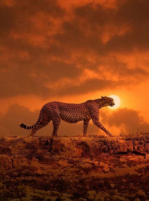 Afrique XXL