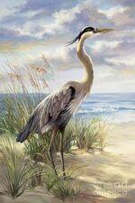 Les oiseaux de l'été
