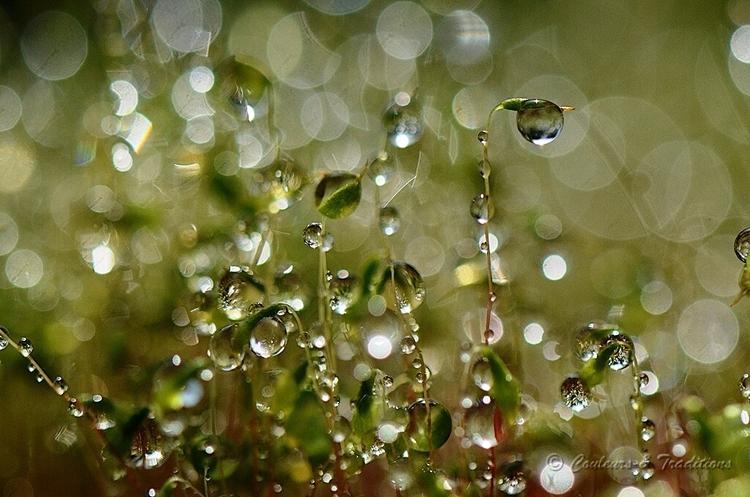 Mousse aprés la pluie