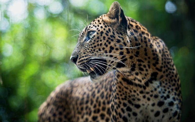 20 photos d'animaux - 8