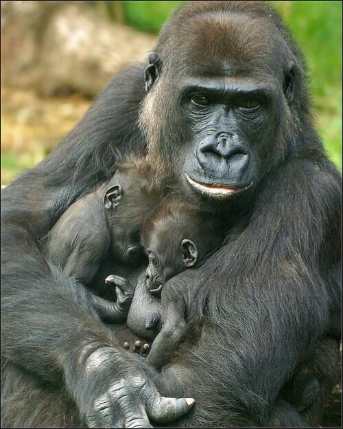 Les bébés animaux - partie 2