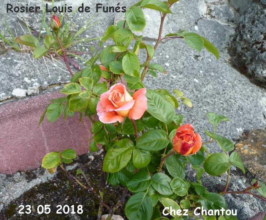 CHANTOUVIVELAVIE : BONSOIR - 23 05 2018