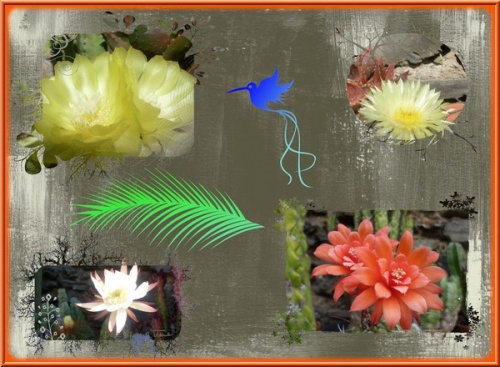 mes cactus en fleurs