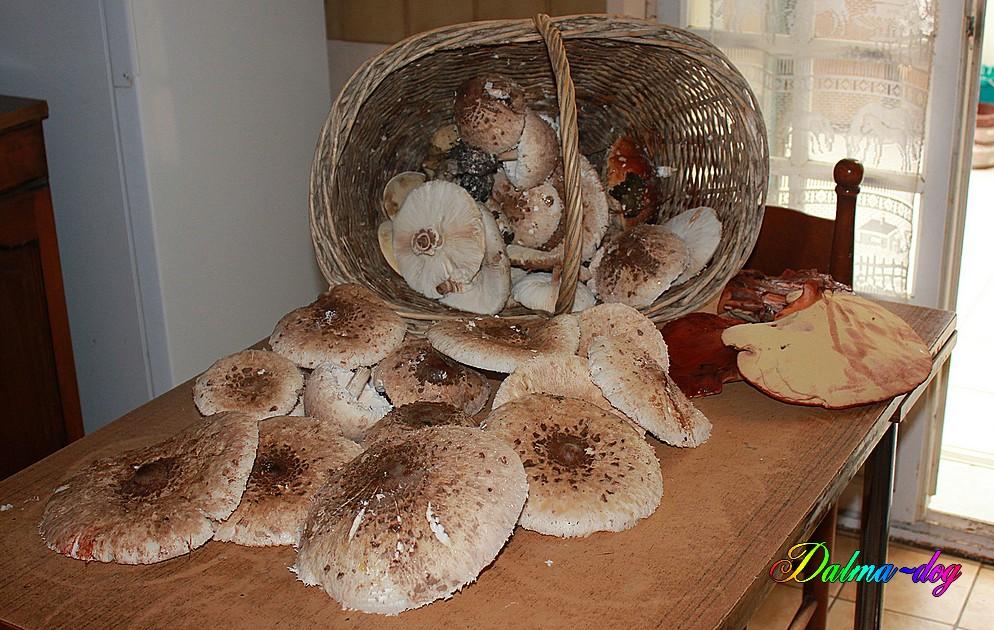 cuillette de champignon