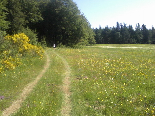 Le trail de l'Aigoual