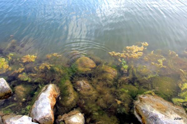 fz05---bord-de-l-eau-2.JPG