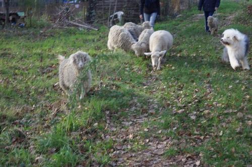 Une nouvelle cabane pour les chèvres et la brebis