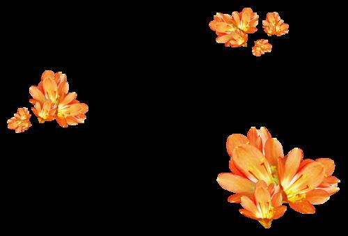 Fleurs en Farandole Série 25
